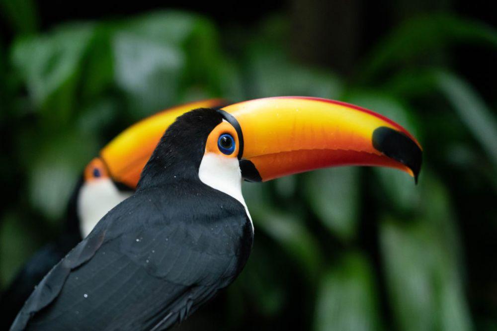 Foto: Divulgação Parque das Aves