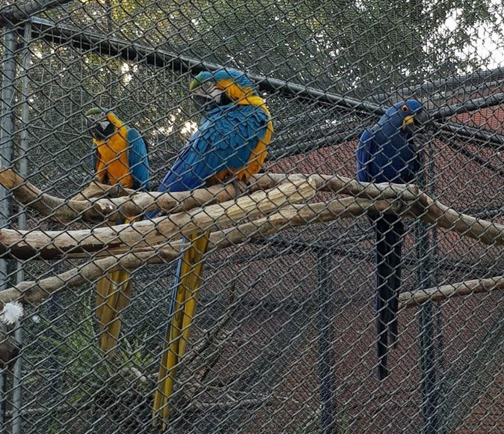 O Passeio Público foi o primeiro zoológico de Curitiba — Foto: Natalia Filippin/G1
