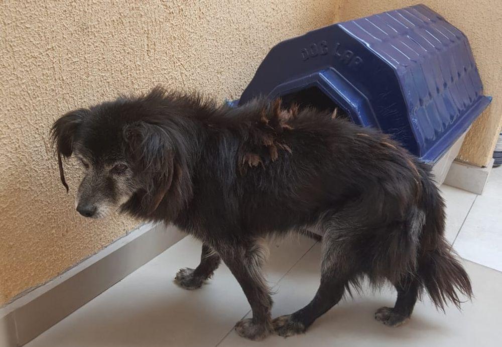 Família reencontra cachorro 10 anos depois do animal ter fugido de casa, em Curitiba — Foto: Arquivo pessoal/Karina Bremm