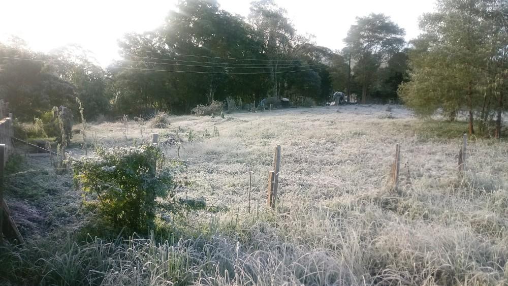 Veja FOTOS da geada no Paraná