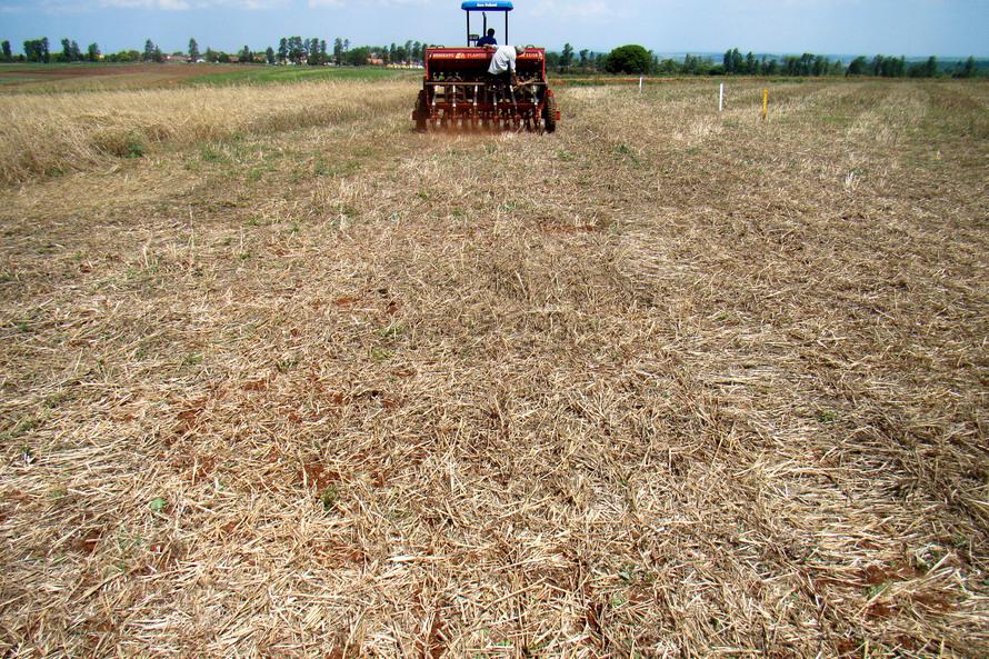 Plantio direto como prática de preservação do meio ambiente. - Foto: Cézar Francisco Araujo Júnior/Iapar