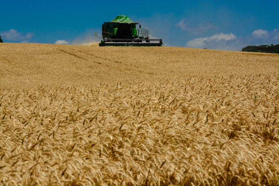O Valor Bruto da Produção Agropecuária (VBP) do Paraná atingiu R$ 89,6 bilhões em 2018, correspondente ao faturamento bruto dos produtores com a comercialização da safra 2017/18.. - Foto - Antonio Costa/Arquivo ANPr
