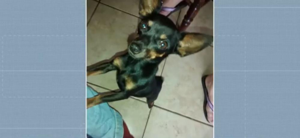 Mulher é condenada a pagar multa de R$ 25 mil por morte de cachorro em Maringá — Foto: Reprodução/ RPC Maringá