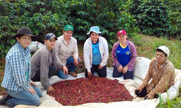 Mulheres do Norte Pioneiro realizam mutirão para colheita de café especial