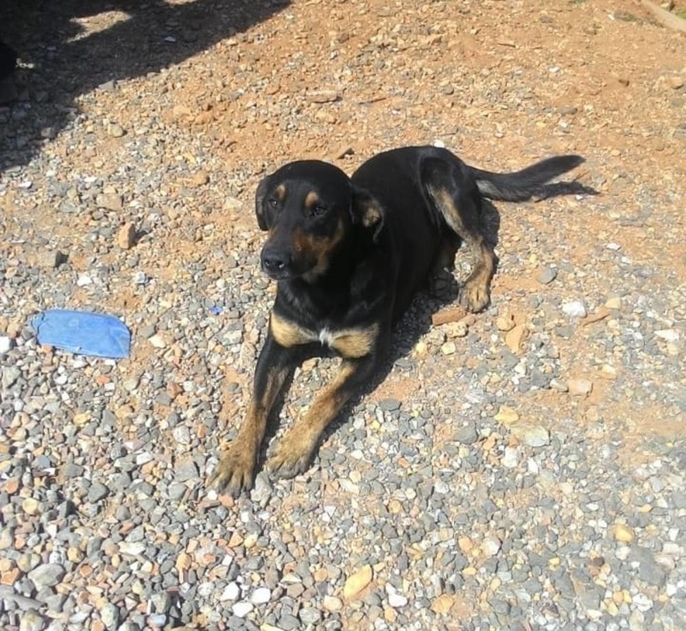 Departamento de Zoonoses disse que animais ficarão em abrigos temporários — Foto: APA-PG/Divulgação