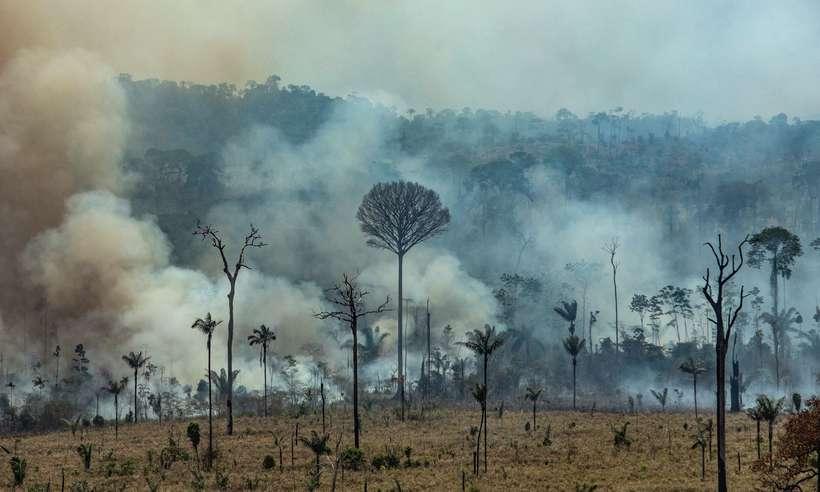 Investigações mostram que o grupo já derrubou e tocou fogo em mais de 5 mil quilômetros de mata (foto: Victor Moriyama/AFP)