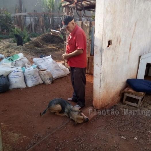 Homem que matou cachorro para vender como carne de paca é preso em Maringá