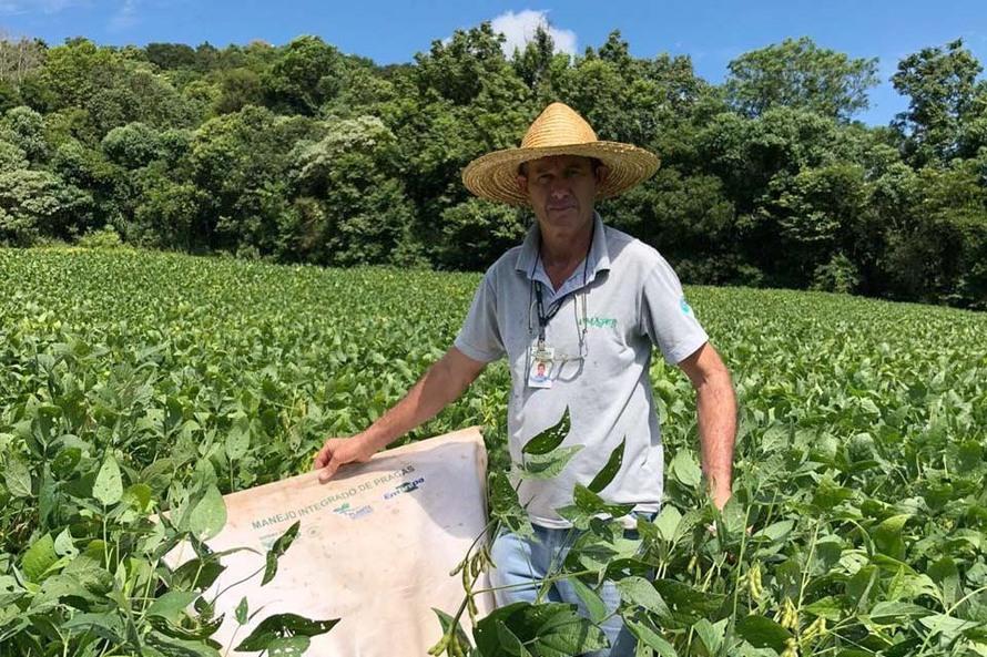 Produtor de Itapejara do Oeste colhe soja sem uso de agrotóxico. Foto:Emater