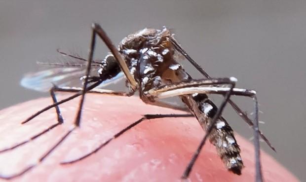 Umuarama tem 906 casos de dengue confirmados e investiga outros mil, diz prefeitura