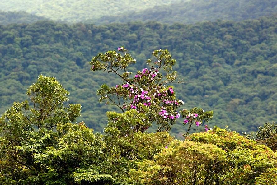 Paraná tem novo mapeamento de cobertura vegetal