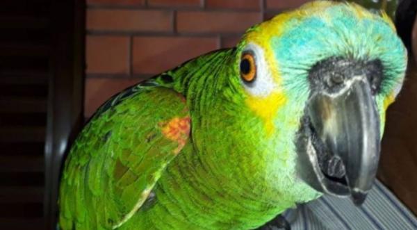 Após denúncia anônima, Polícia Civil recupera papagaio e Zé volta para casa