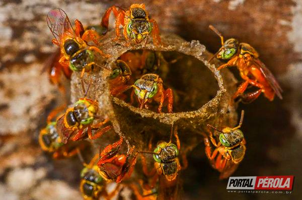 Curso na Capela Santa Maria apresenta benefícios das abelhas sem ferrão