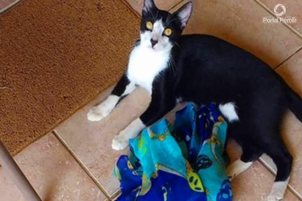Dona de gato cleptomaníaco cria perfil para devolver itens furtados