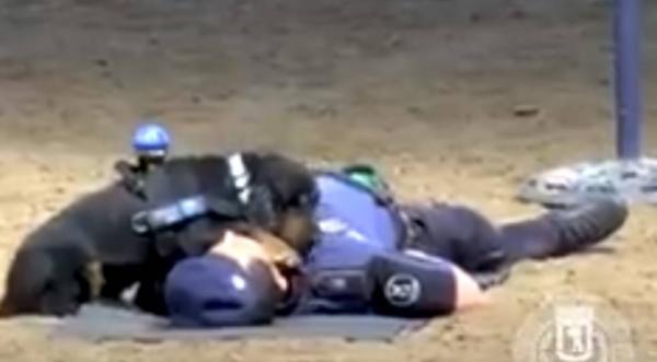 Cão policial aprende a fazer reanimação cardiorrespiratória